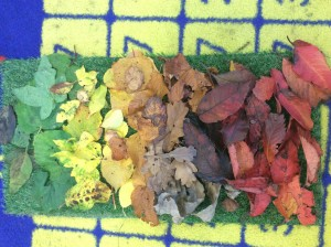 So we put all of the leaves together and made a leaf rainbow.